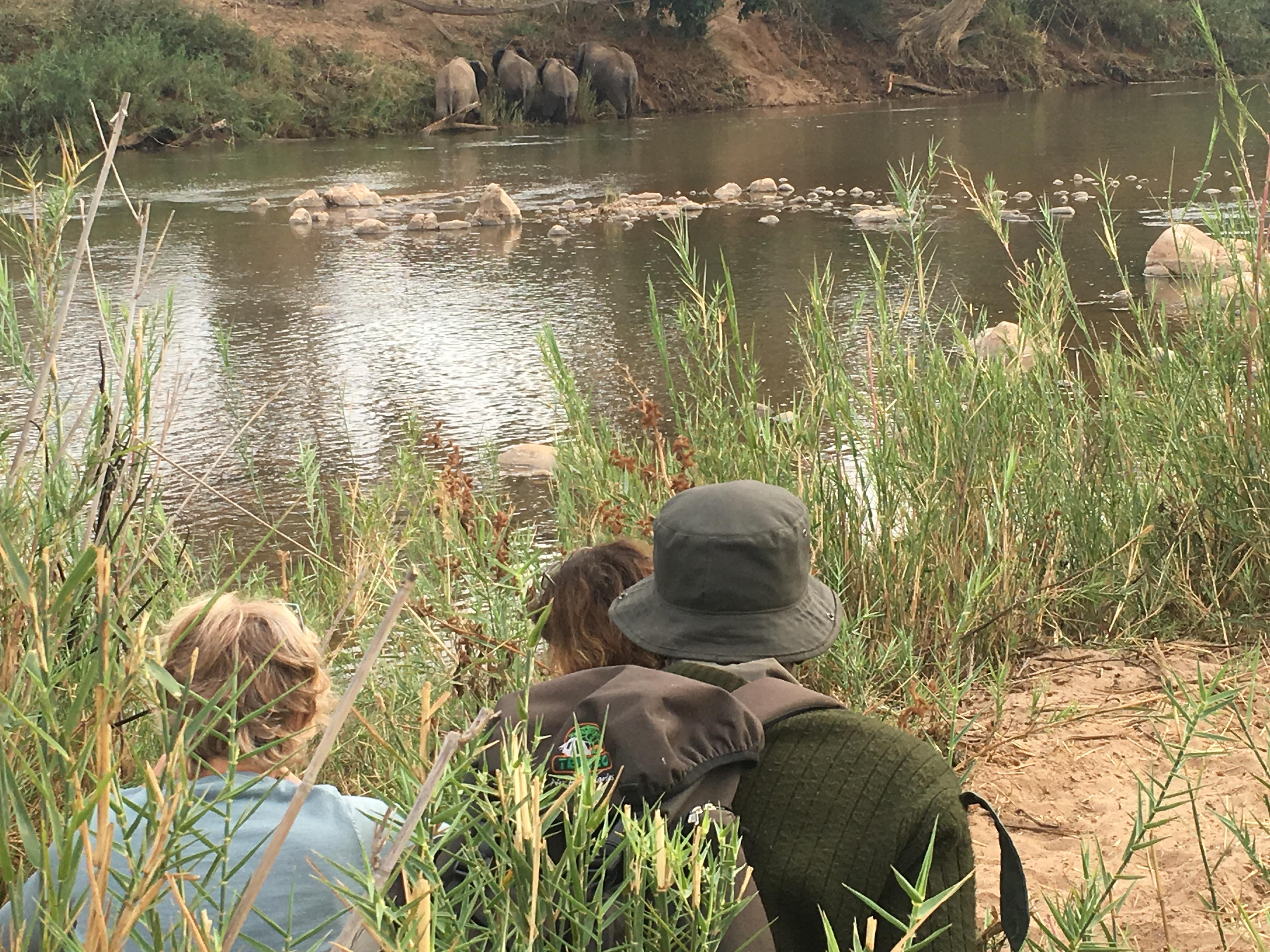 Wildtier-Beobachtung mit deutschem Übersetzer in Südafrikas Greater Kruger Nationalpark