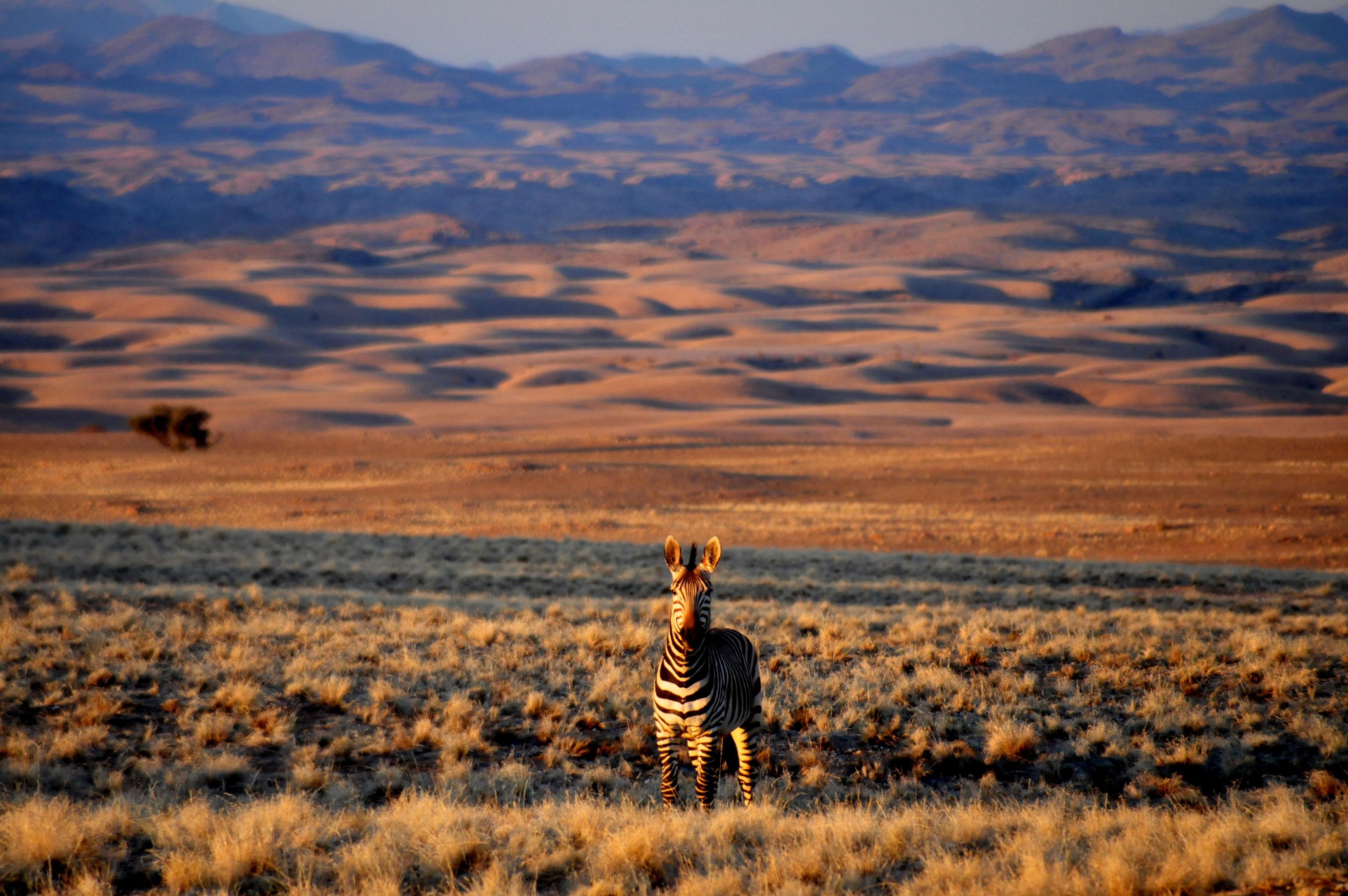 Afrika Safari in Namibia - in der Kleingruppe
